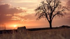Beautiful Hay Wallpaper 32983