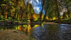 Beautiful HDR Forest Wallpaper 38920