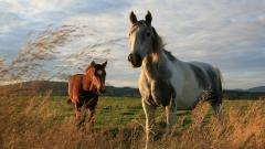 Beautiful Horses Field Wallpaper 44835