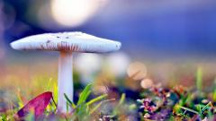 Beautiful Mushroom Wallpaper 27501