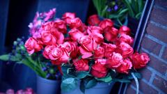 Beautiful Roses Wallpaper 26109