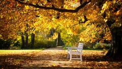 Bench Wallpapers 31640