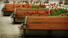 Benches 31635