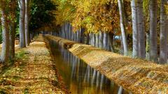 Birch Tree Wallpaper 25329