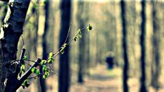Blurred Wallpapers 36391