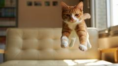 Cat Bed Jump Wallpaper 43753
