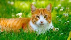 Cat Field Wallpaper 44816