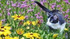 Cat Field Wallpaper HD 44815
