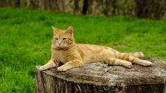 Cat on Tree Stump Wallpaper 43759
