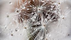 Cool Dandelion Seeds Wallpaper 42643