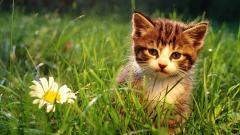 Cute Kitten Grass Background 18864