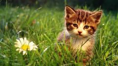 Cute Kitten Grass Background 18864