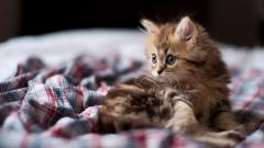 Cute Kitten Rest Wallpaper 44712