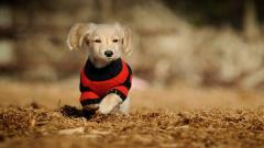 Cute Sweaters Wallpaper 43234