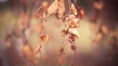 Dry Autumn Leaves Wallpaper 44435