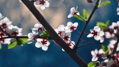 Fantastic Dogwood Flowers Wallpaper 37250