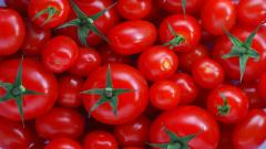 Fantastic Tomatoes Wallpaper 44461
