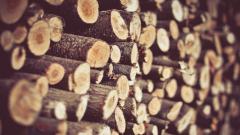 Firewood 40082