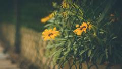 Flowers Fence Wallpaper 44857