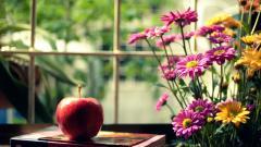 Flowers Mood Wallpaper 43963
