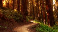 Forest Wallpaper 21508