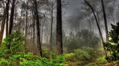 Forest Wallpaper 21513