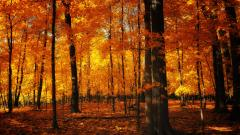 Forest Wallpaper 21517