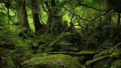 Forest Wallpapers 21509
