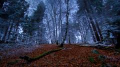 Forest Wallpapers 21514