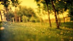 Forest Wallpapers 21516