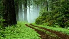 Free Forest Wallpapers 21510