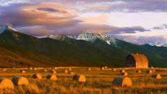 Free Hay Wallpaper 32987