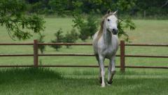 Free Horse Wallpaper 25699