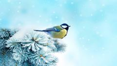 Free Snow Bird Wallpaper 38530
