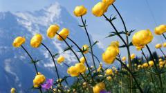 Free Wildflower Wallpapers 37098