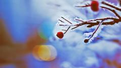 Frozen Berries Wallpaper 44421