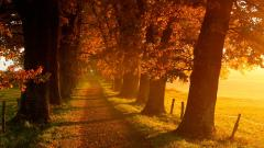 Gorgeous Autumn Wallpaper 44428