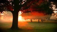 Gorgeous Dawn Wallpaper 42249