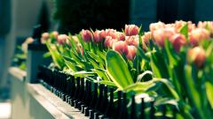 Gorgeous Flowers Fence Wallpaper 44862