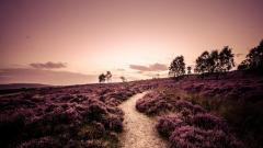 Gorgeous Footpath Wallpaper 44962