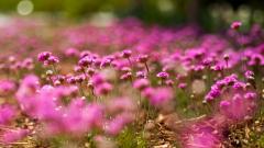 Gorgeous Pink Macro Wallpaper 37838