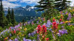 Gorgeous Wildflowers 37110