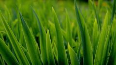 Grass Background 18854