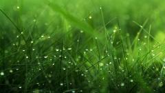 Grass Background 18855