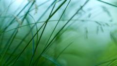 Grass Background 18856