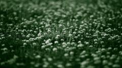 Grass Background 18857