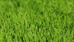Grass Background 18860