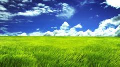 Grass Background 18876