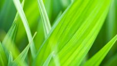 Grass Background HD 18868