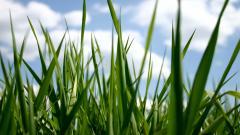 Grass Backgrounds 18858